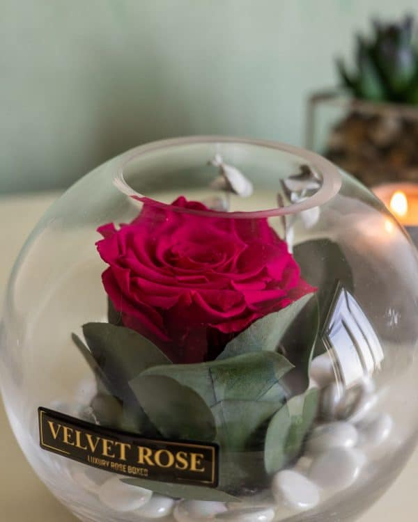 RUBY RED – GLASS SOLO ROSE – ETERNITY REAL PRESERVED ROSE