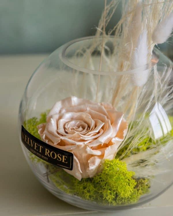CHAMPAGNE SATIN – GLASS SOLO ROSE – ETERNITY REAL PRESERVED ROSE