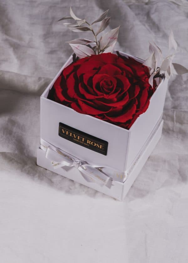 Ruby Red - The Bonita Solo Rose Box - Extra Large Eternity Real Preserved Roses